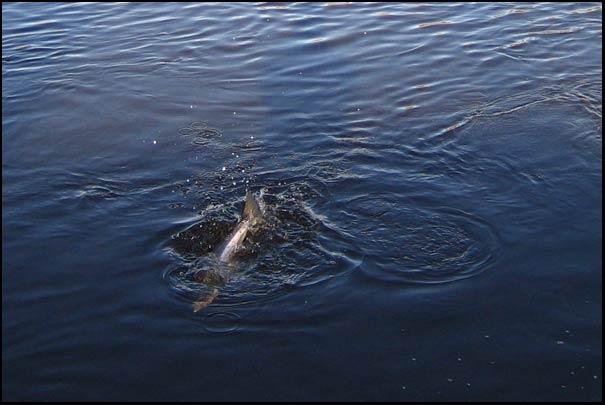 Slaney River fishing